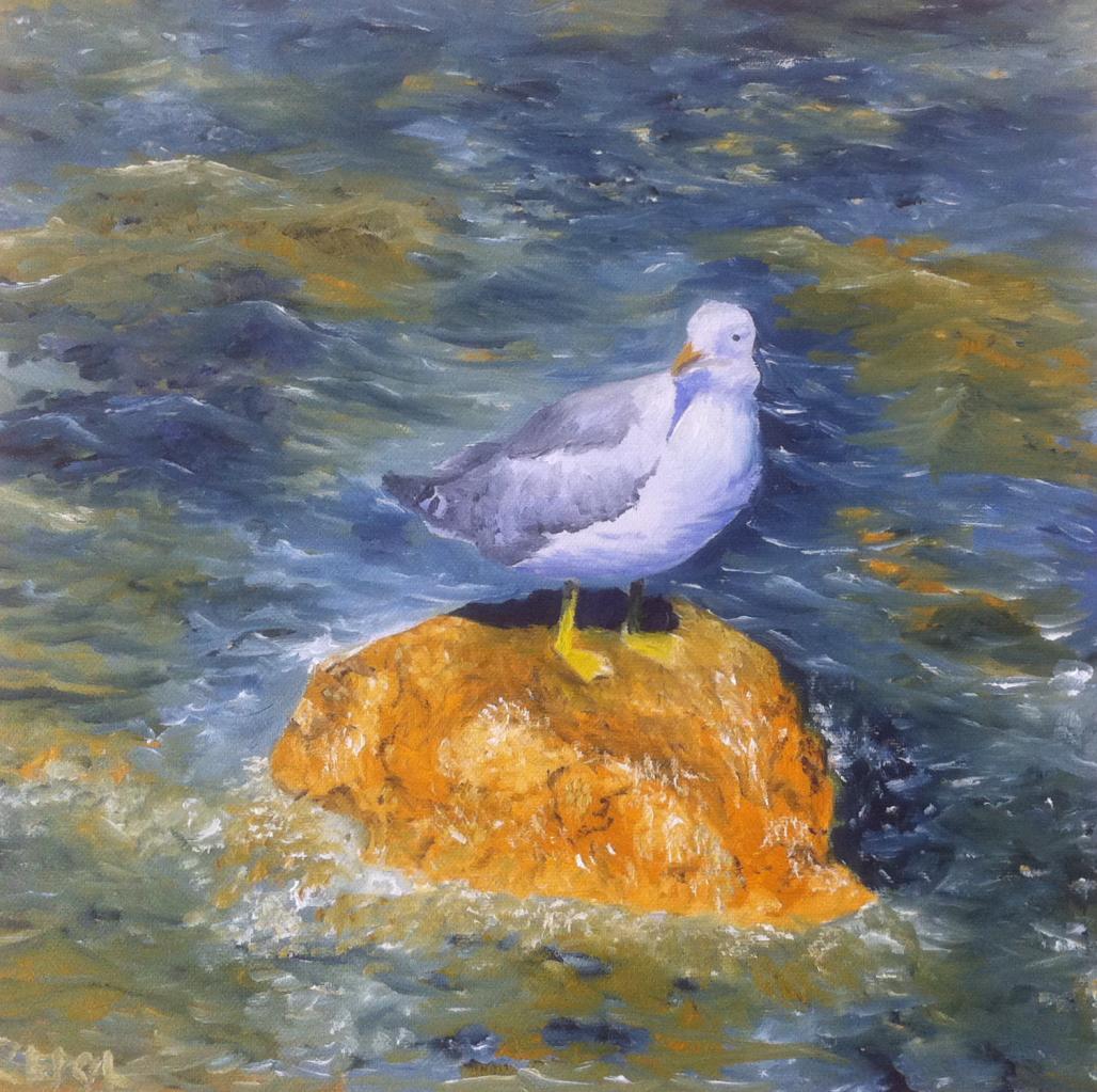 Mouette sur un rocher